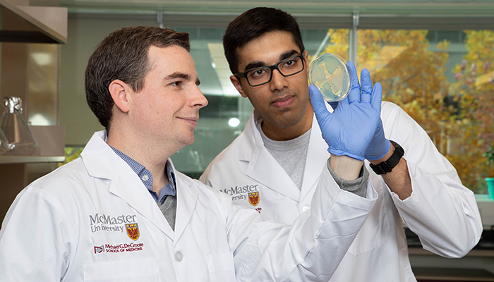McMaster University researcher John Whitney, left, and PhD candidate Shehryar Ahmad inspect a petri dish with the bacteria that produce the toxin