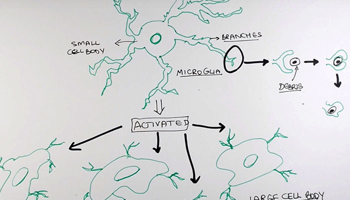 The driving cells of ALS