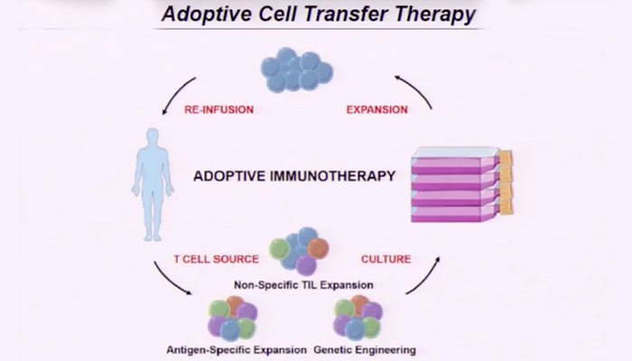 Adoptive cell transfer therapy