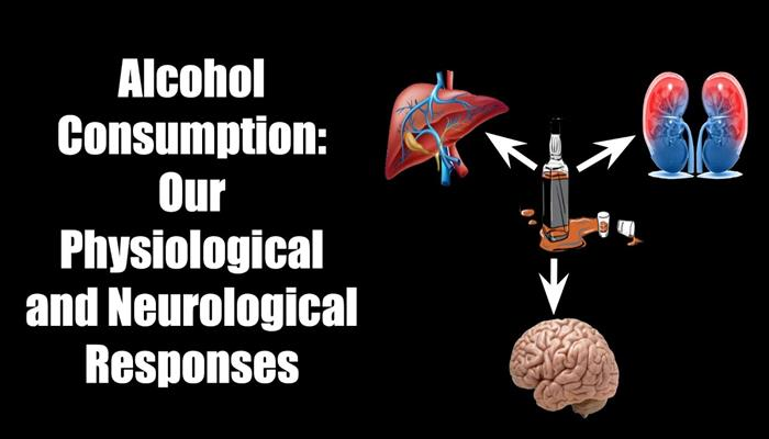 Alcohol Consumption Our Physiological and Neurological Responses