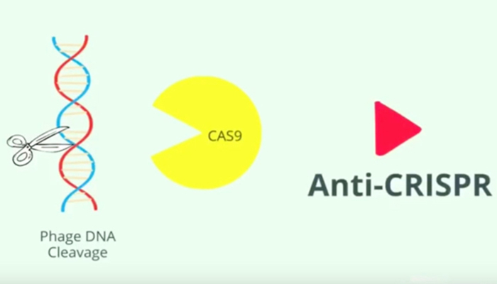 anti-CRISPR