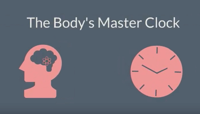 The body's master clock