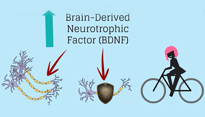 Brain derived neurotrophic factor