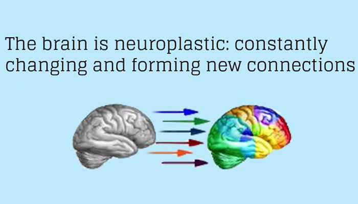 Brain is neuroplastic