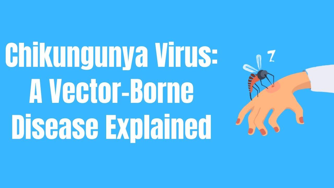 Chikungunya Virus A Vector-borne Disease Explained