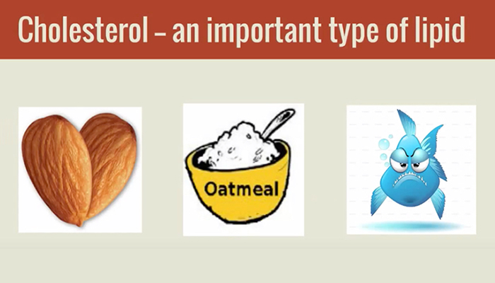 Cholesterol, an important type-of-lipid