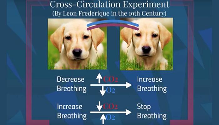 Cross circulation experiment