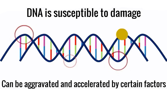 DNA is susceptable to damage