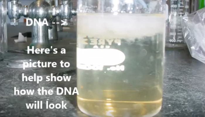 DNA extraction experiment