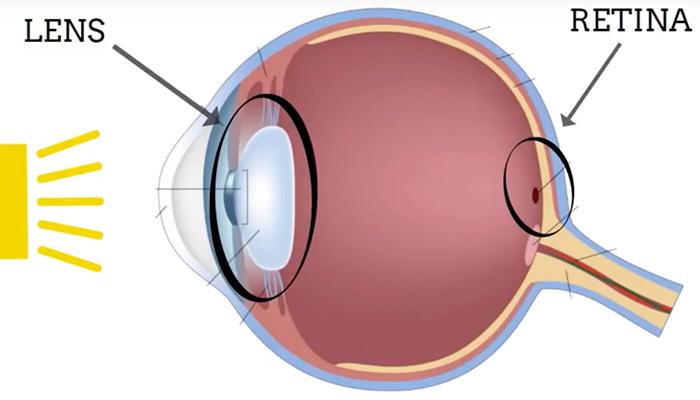 Eye lens and retina