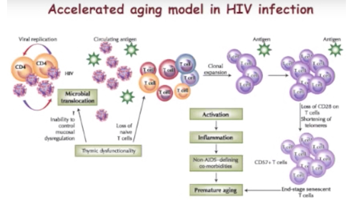 Growing old with HIV: Research presentation