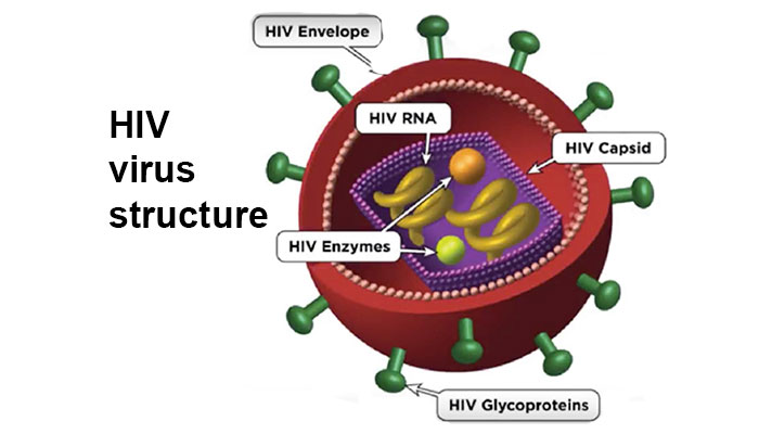 HIV virus structure