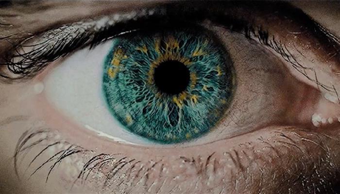 Human eye] and dilation