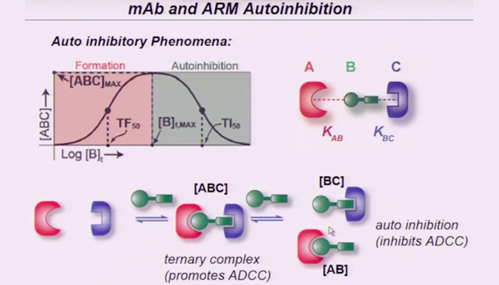 mAb and ARM autoinhibition