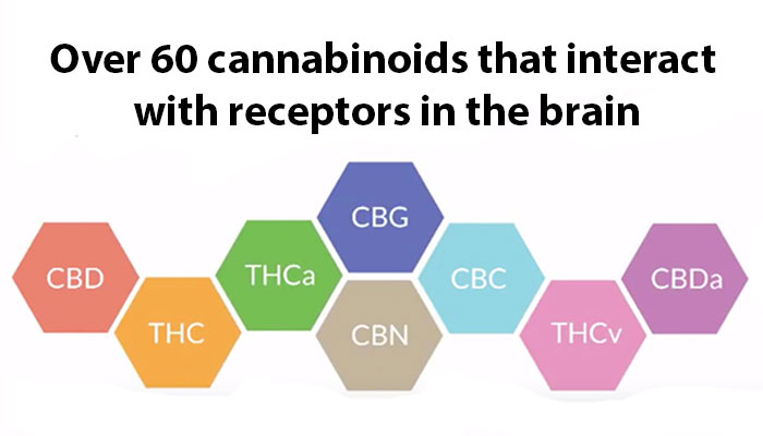 60 cannabinoids in marijuana
