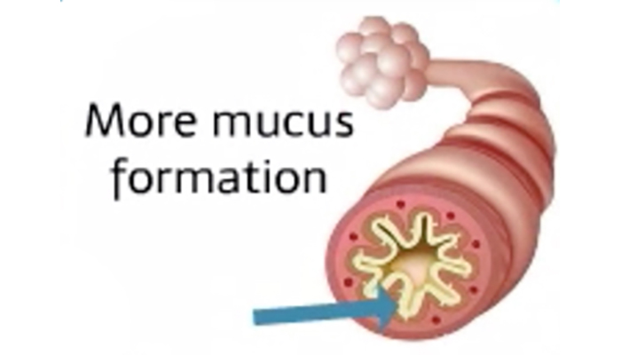 Mucus formation
