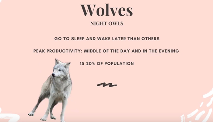 Sleep animals - wolf (night owl)