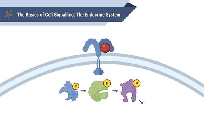 The Basics of Cell Signalling