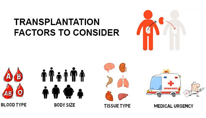 Transplantation factors