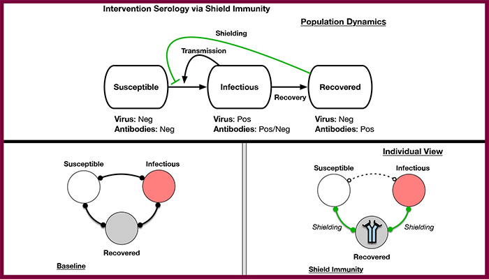 A graphic outlining shield immunity.