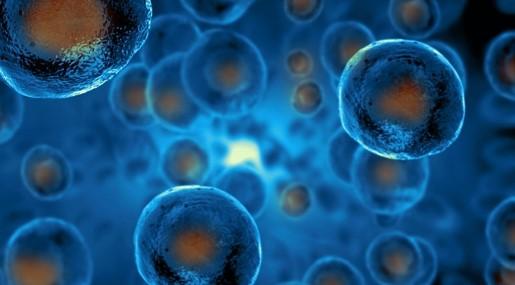 Stem Cells Cancer Biology